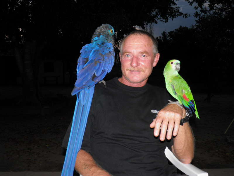 3 Vögel