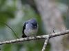 Blaupunktbird