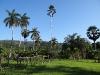 verschiedene Palmen