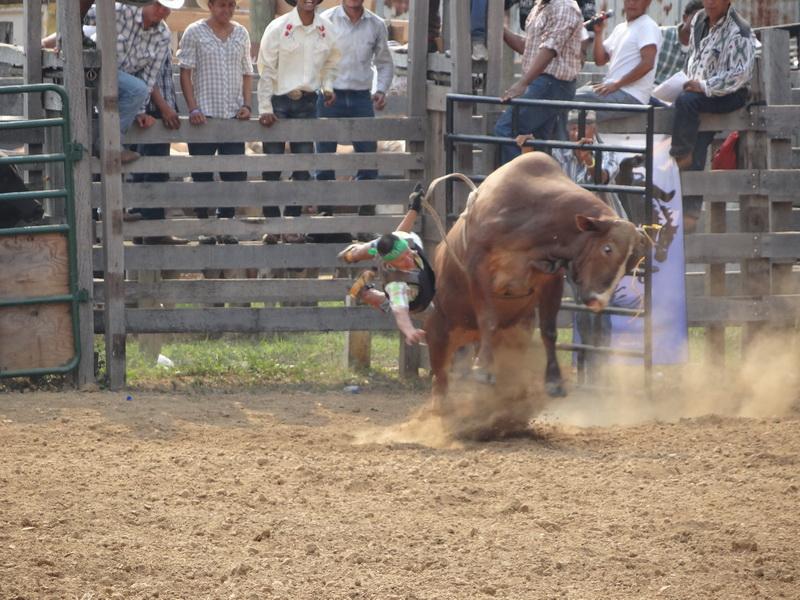 Bullriding 2 Sekunden