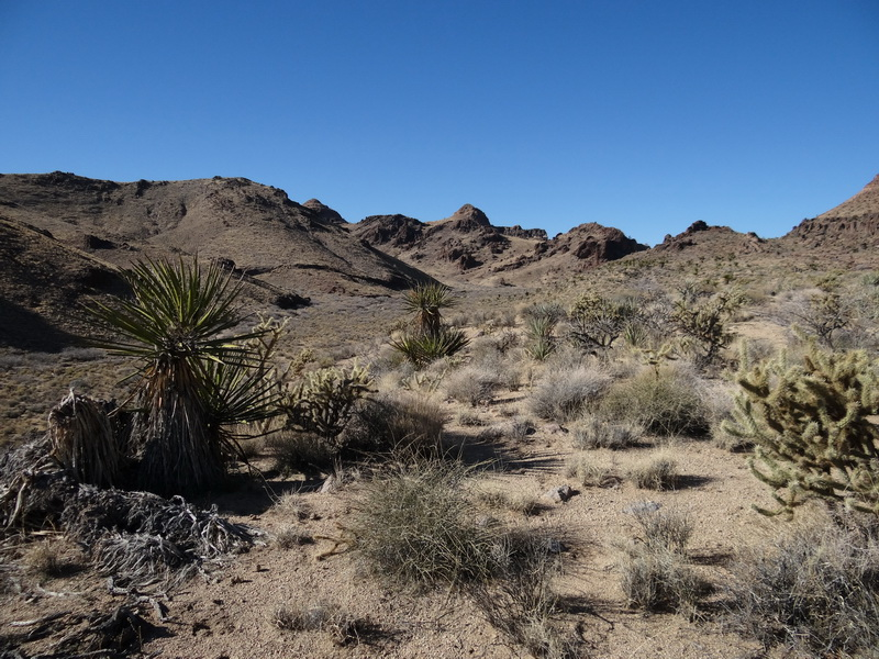 Mojavetrail
