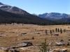 NP Yosemite