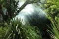 Smoke in the jungle