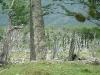 sterbender Wald