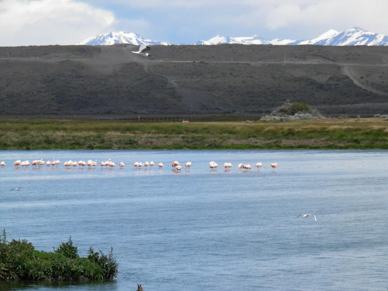 immer wieder Flamingos