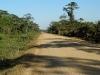 Dschungelpiste nach Trinidad