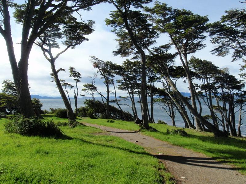 winderprobte Bäume