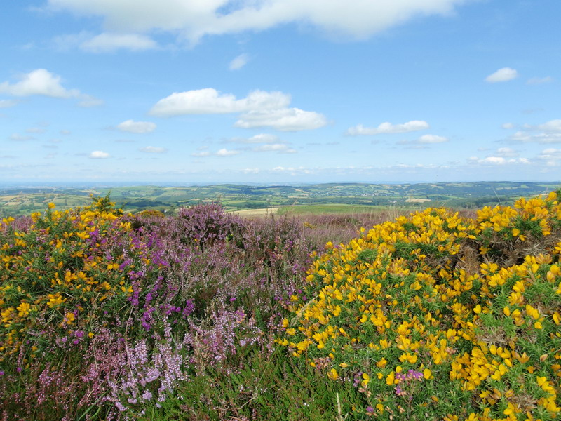 wunderschöne Flora im Dartmoor