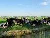 viel Farmland
