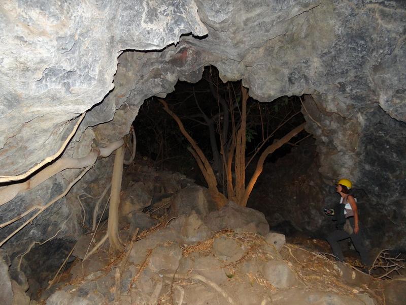 Höhlenbaum
