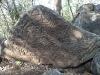 Petroglyphen im Busch